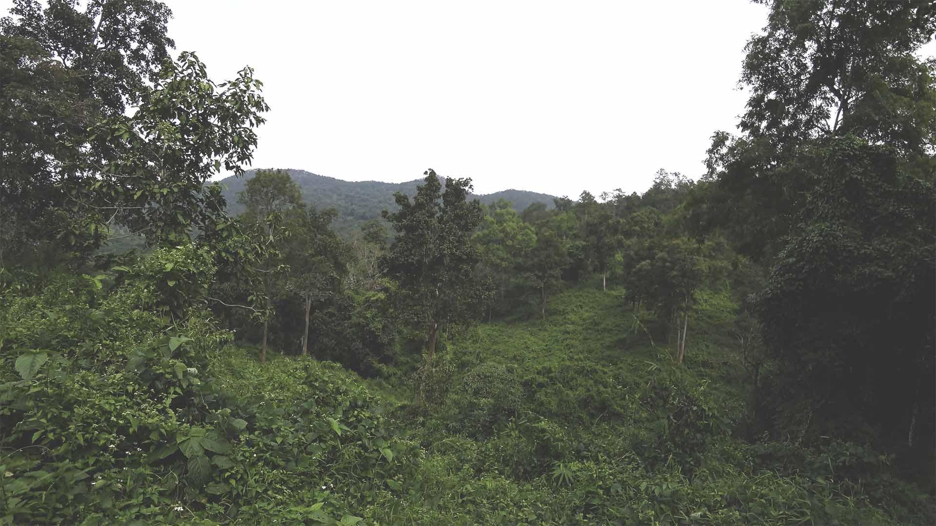 Elefantentour - Chiang Mai Mountain Sanctuary - Aussicht auf den Dschungel und die Landschaft