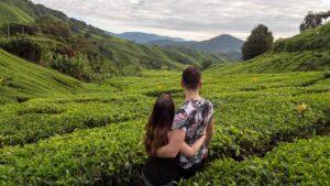 Teeplantagen in dem Cameron Highlands