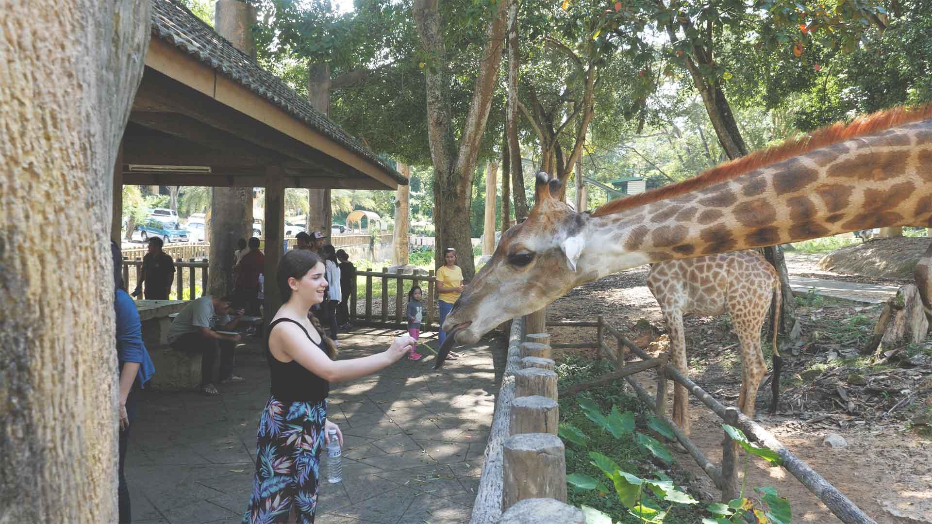 Chiang Mai Zoo - Jasmin füttert Giraffe