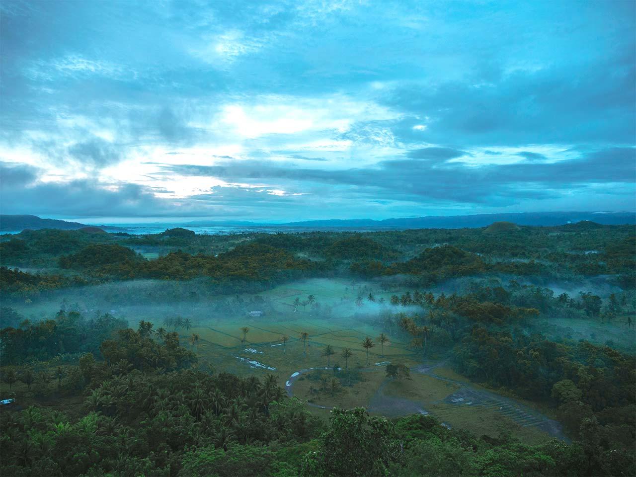 Palmenlandschaft mit Nebel