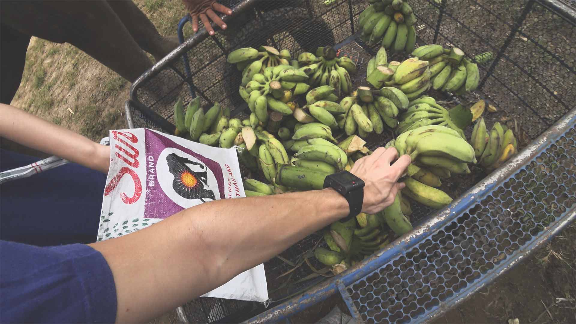 Elefantentour - Chiang Mai Mountain Sanctuary - Bananen auffüllen