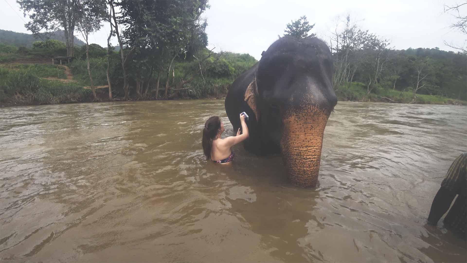 Elefantentour - Chiang Mai Mountain Sanctuary - Jasmin im Fluss mit einem Elefanten - mit Elefanten baden und diese waschen