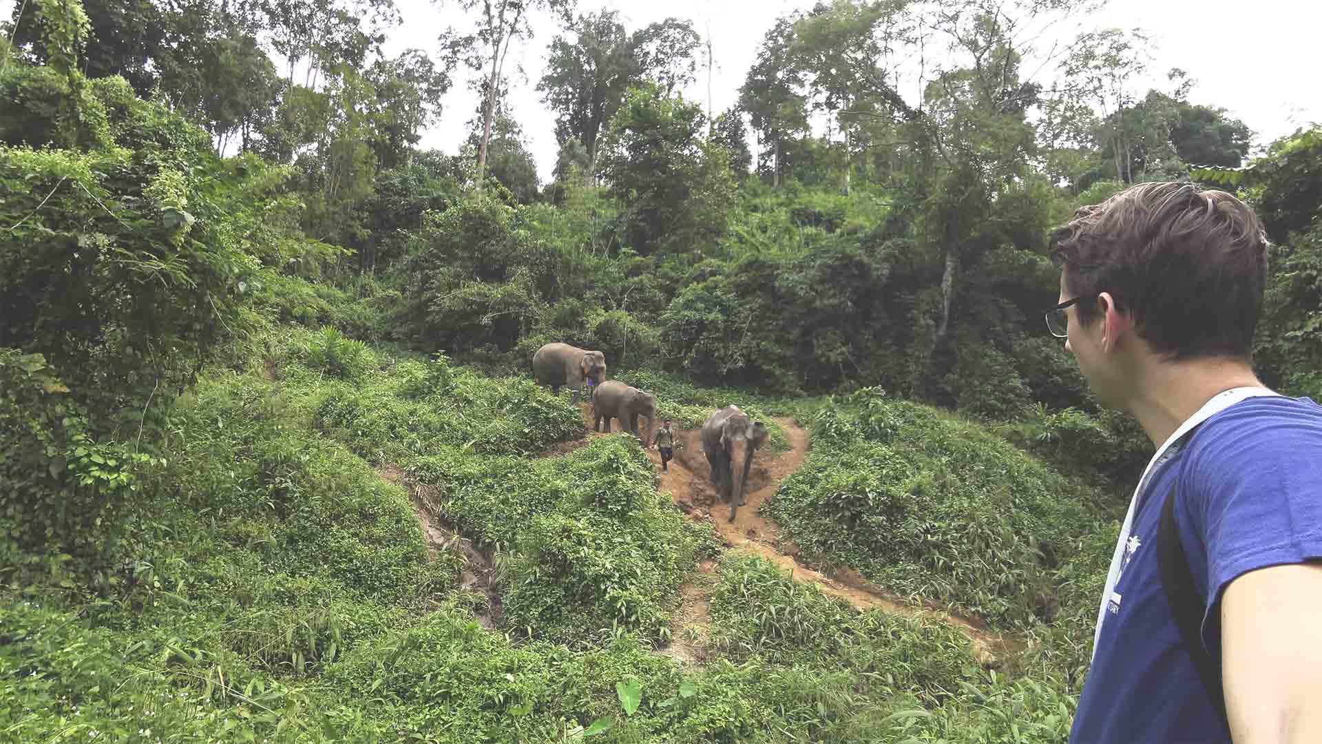 Elefantentour - Chiang Mai Mountain Sanctuary - Trekking-Tour durch den Dschungel - Abstieg mit den Elefanten