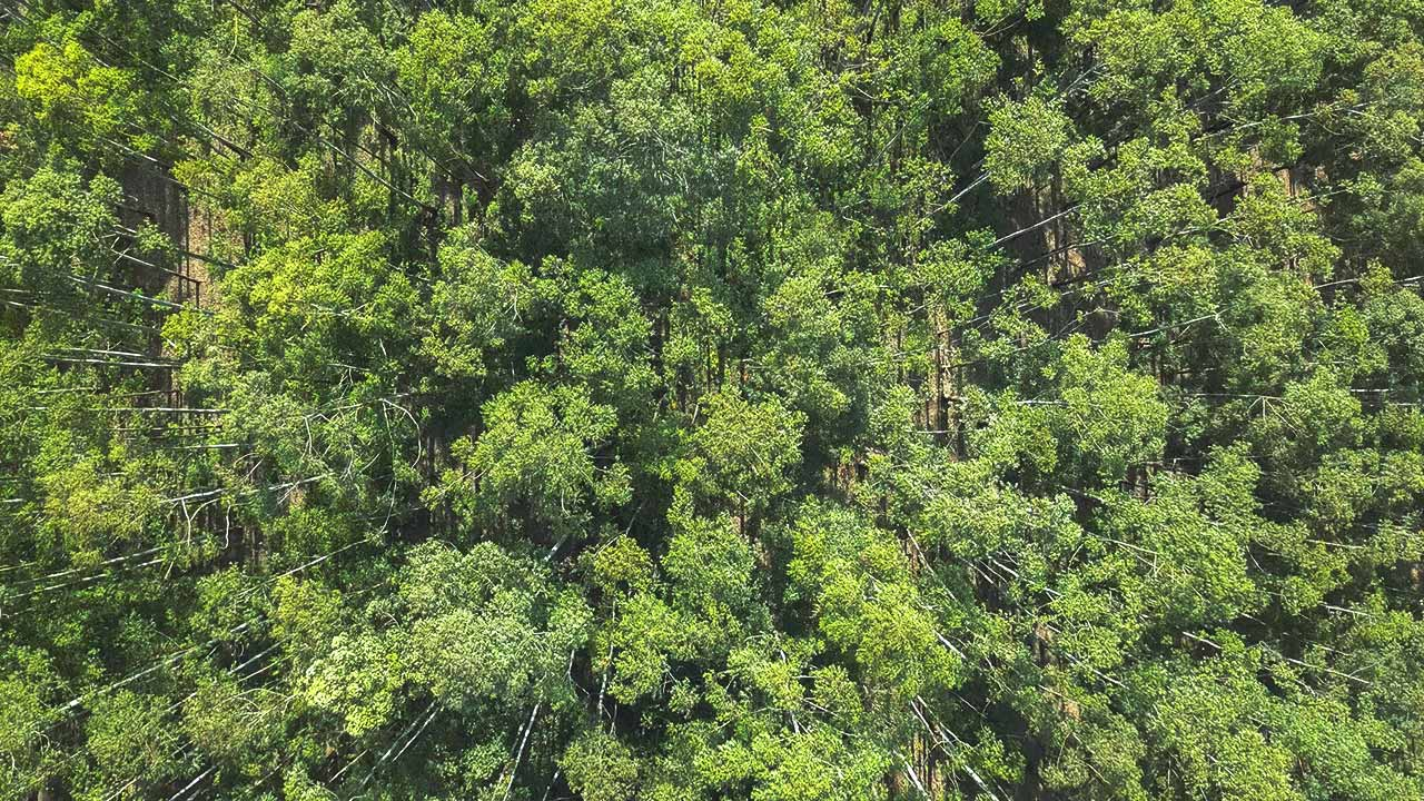 Bäume von oben mit der Drohne