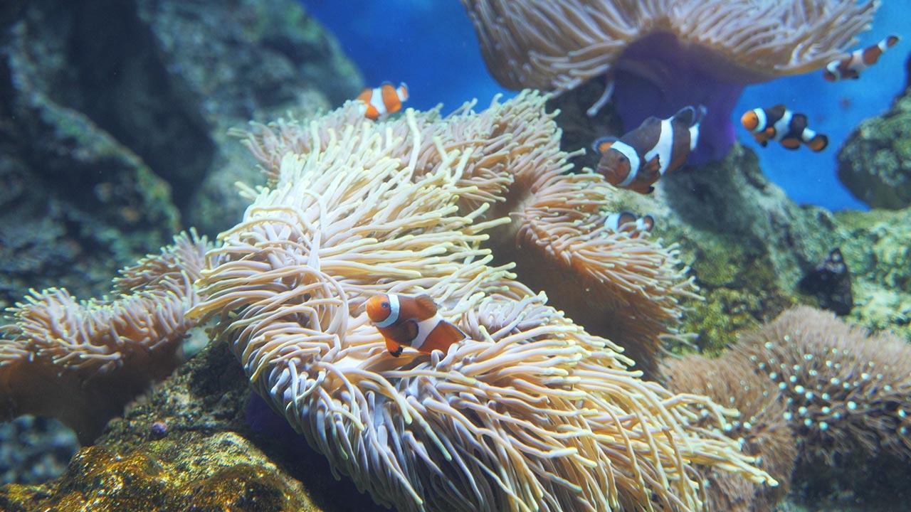 S.E.A. Aquarium in Singapur - Freizeitinsel Sentosa - Nemo