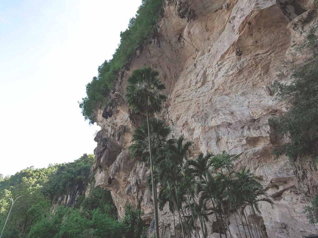 Palmen am Höhlentempel Kek Lok Tong in Ipoh