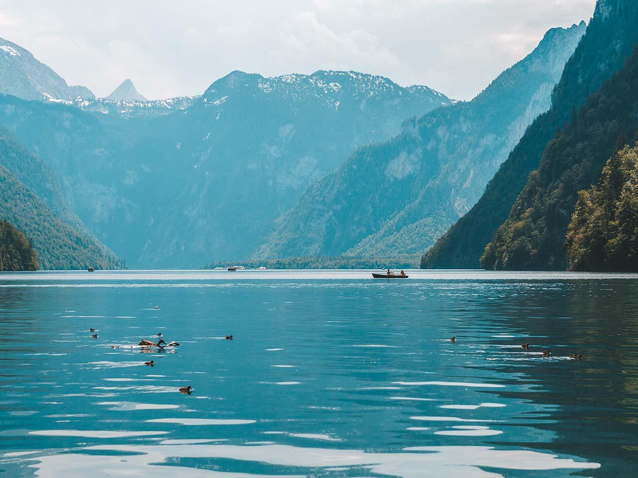 Enten, Babyenten und ein Kanu auf dem Königssee