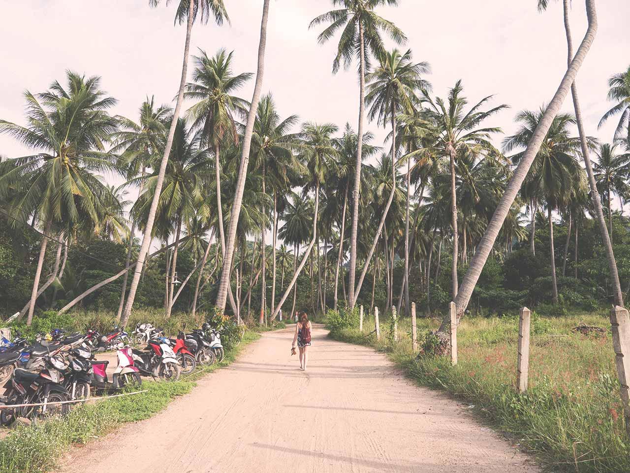 Koh Tao in Thailand - Jasmin unter Palmen