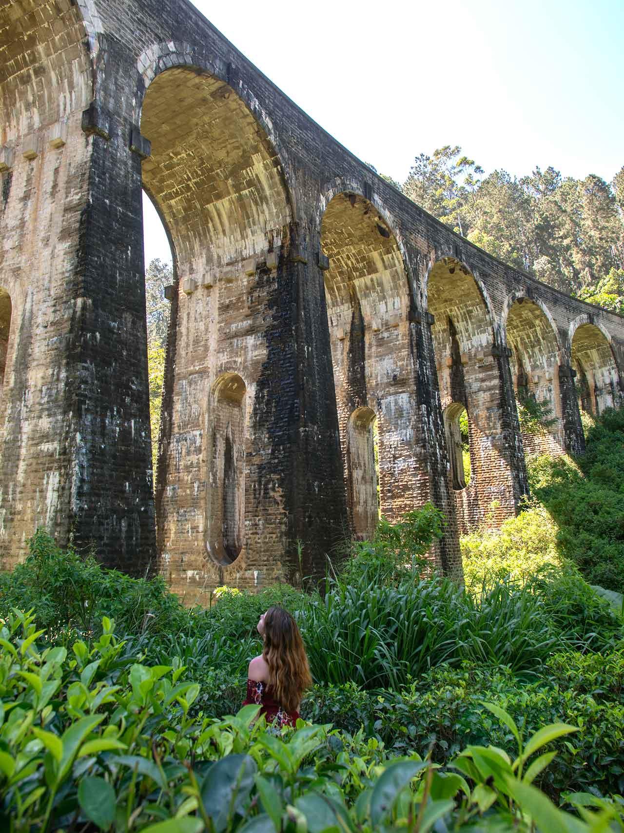 Jasmin in einer Teeplantage unter der Nine Arch Bridge