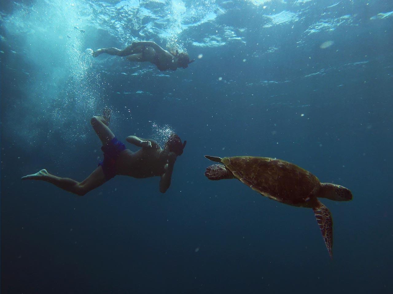 Valentin und Jasmin beim Schnorcheln mit einer Meeresschildkröte