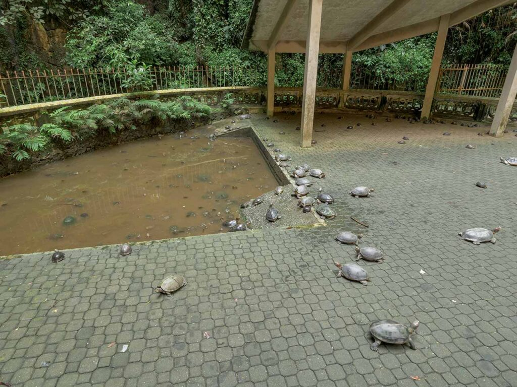 Schildkröten im Sam Poh Tong Tempel in Ipoh