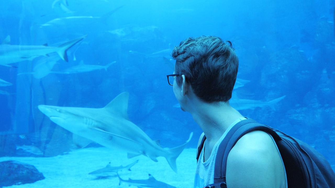 Freizeitinsel Sentosa - Valentin vor dem Haifischbecken