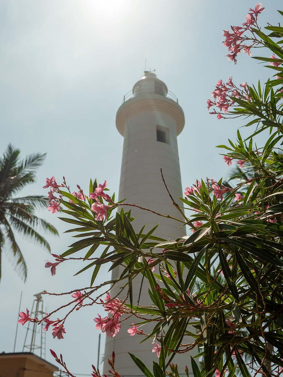 Leuchtturm beim Galle Fort in Sri Lanka mit Blumen im Vordergrund