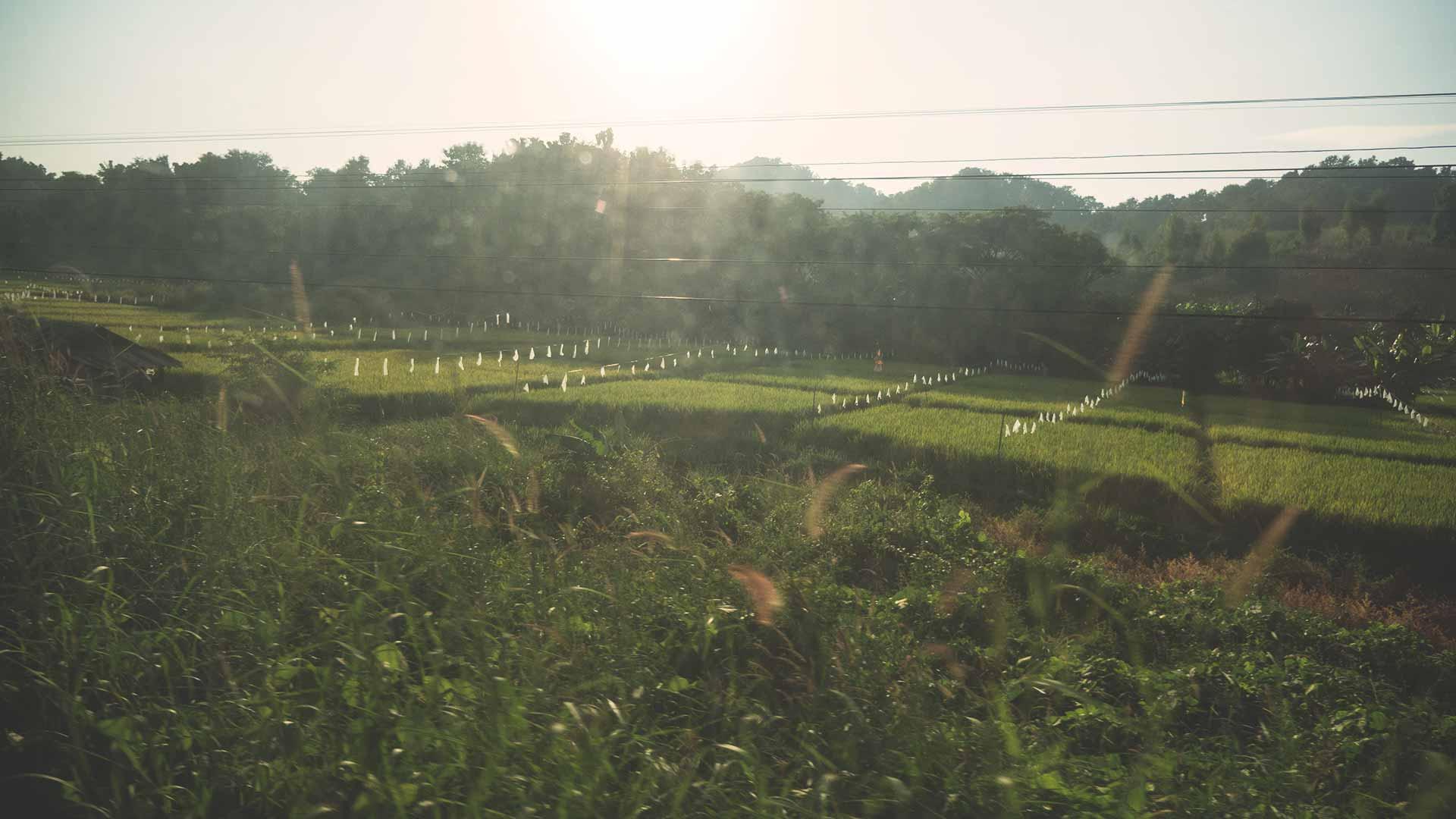 Thailand Landschaft - Zug von Bangkok nach Chiang Mai