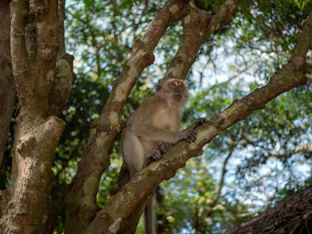 Ein Affe auf dem Baum