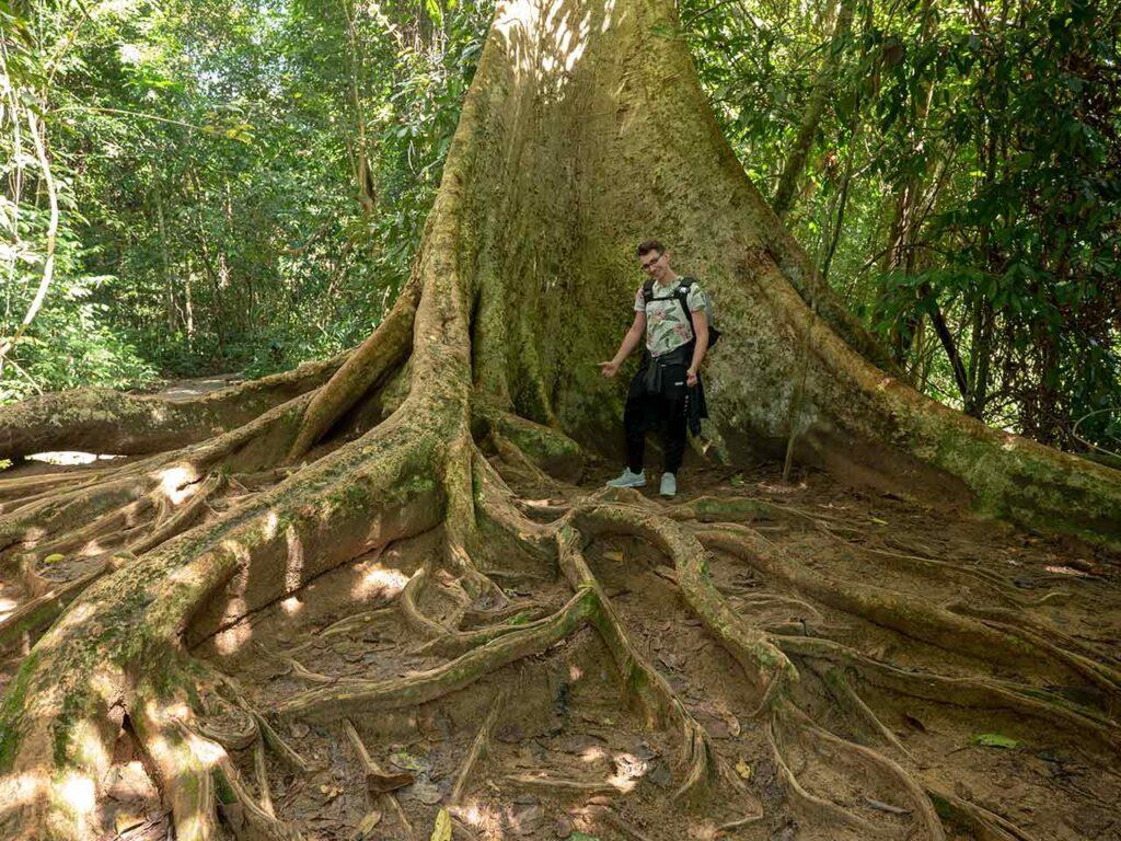 Valentin zwischen Wurzeln eines riesigen Baums