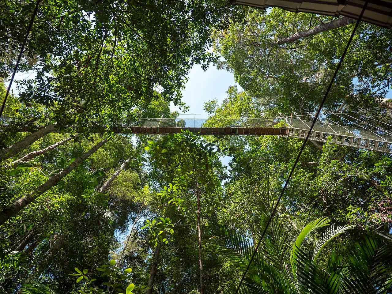Canopy Walkway von unten